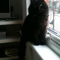 Photo of Waylon (2424)