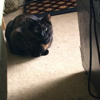 Photo of Cleo (3431)