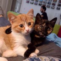 Photo of Lemur & Quark (11925)