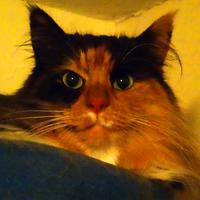 Photo of Gita (4550)