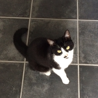 Photo of Bailey (2431)