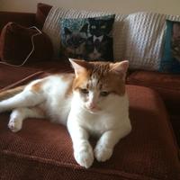 Photo of Wilson (9999)