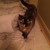 Photo of Suzy (12227)