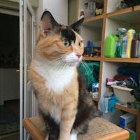 Photo of Sumi (10017)