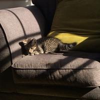 Photo of Stella (4326)