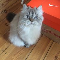 Photo of Lola (10989)