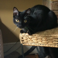 Photo of Maurice (3719)