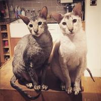Photo of Juandi & Remi (5574)
