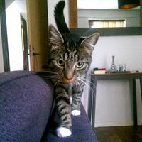 Photo of Pax (3196)