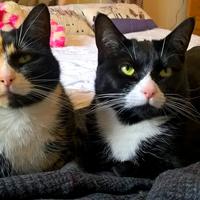 Photo of Phoebe and Selene (7707)