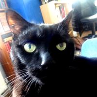 Photo of Odin (4551)