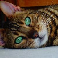 Photo of Cassie (10530)
