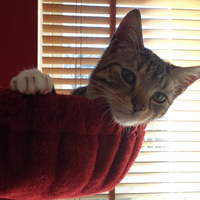 Photo of Ozzy (6632)